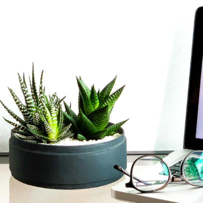 Blog for WanderPot. Medium Sized Succulent in Charcoal blue handmade pot. Biodegradable and recycled pink pot. Long-lasting and unique sustainable plant gift.
