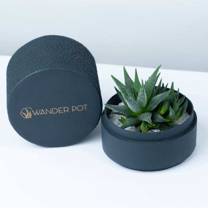 Mini Haworthia in a charcoal blue handmade pot, mini aloe succulent. Biodegradable and recycled pot. Long-lasting and sustainable plant gift.