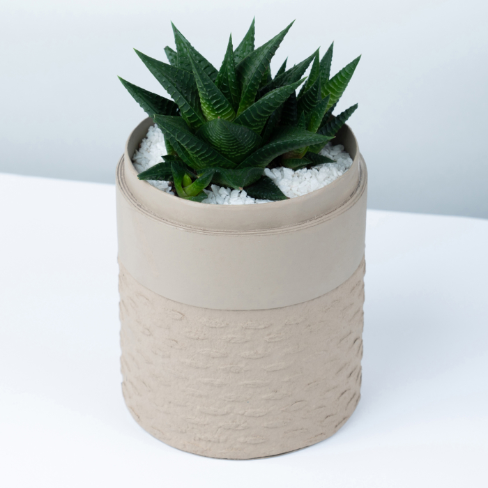 Mini Haworthia in a latte handmade pot, mini aloe succulent. Biodegradable and recycled pot. Long-lasting and sustainable plant gift.