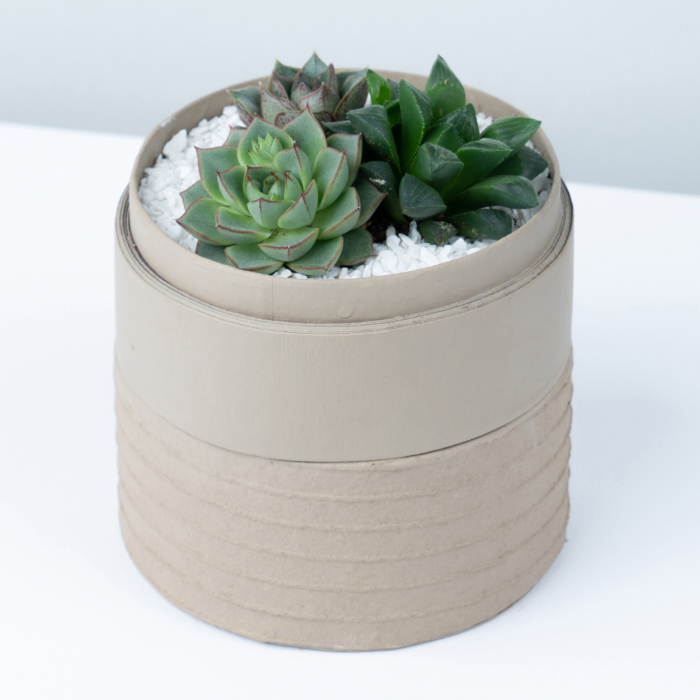 Mini Succulent mix in a latte handmade pot, midi jungle cacti mix. Biodegradable and recycled pot. Long-lasting and sustainable plant gift.