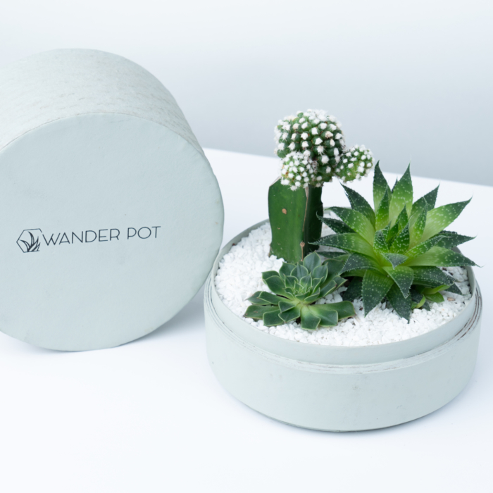Midi Succulent mix in a mint green handmade pot, midi jungle cacti mix with lid. Biodegradable and recycled pot. Long-lasting and sustainable plant gift.