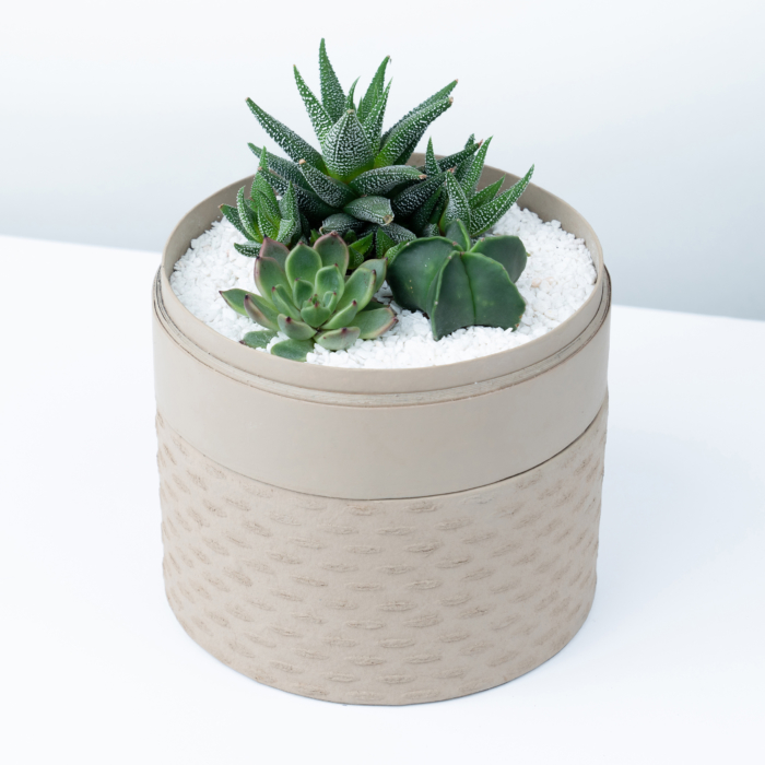 Midi Succulent mix in a latte handmade pot, midi jungle cacti mix. Biodegradable and recycled pot. Long-lasting and sustainable plant gift.