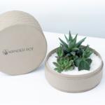 medium beige plant pot with succulents