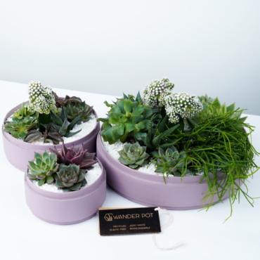 Trio set of Lush Succulent mix in a dust pink handmade pot, lavish cacti mix with lids and personalised gift card. Biodegradable and Recycled Pot. Long-lasting and sustainable plant gift.