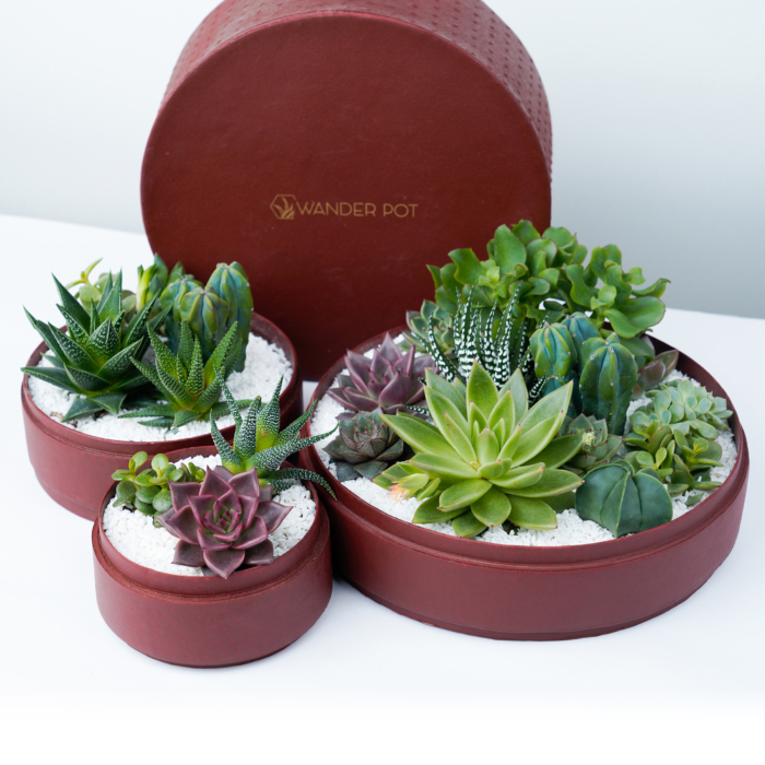 Trio set of Lush Succulent mix in a Red handmade pot, lavish cacti mix with lids. Biodegradable and Recycled Pot. Long-lasting and sustainable plant gift.