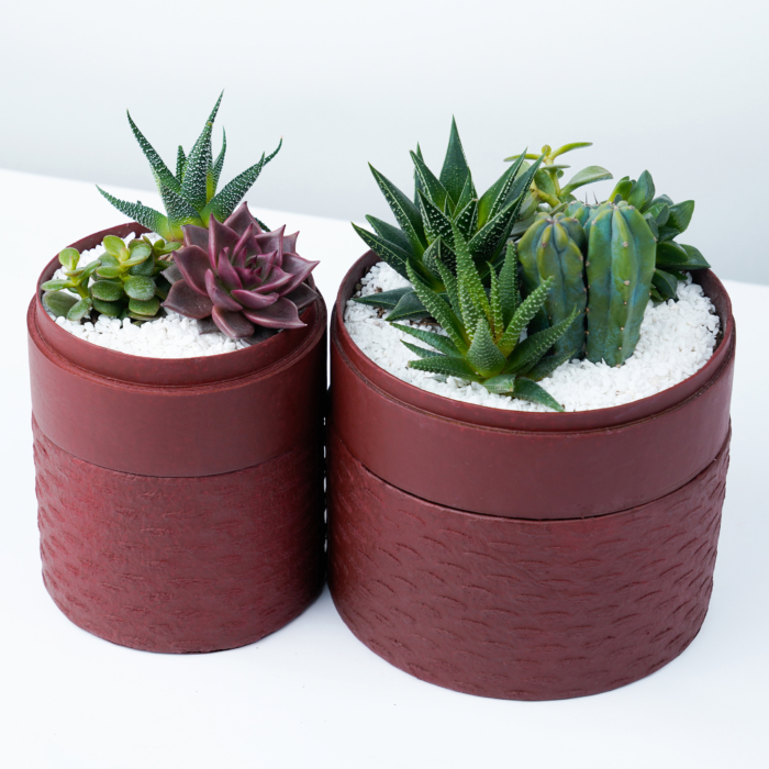 Aerial view of Succulent mix in two red handmade pots. Biodegradable and recycled pot. Long-lasting and sustainable plant gift.