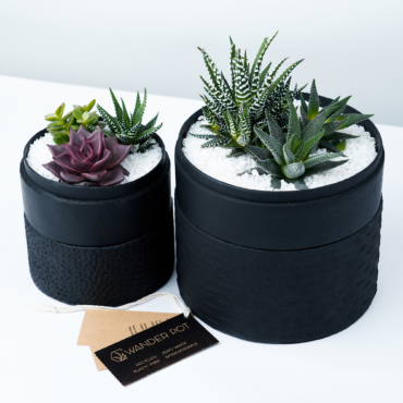 Duo set of Succulent mix in a black handmade pot, lavish cacti mix with lids and personalised gift card. Biodegradable and Recycled Pot. Long-lasting and sustainable plant gift.
