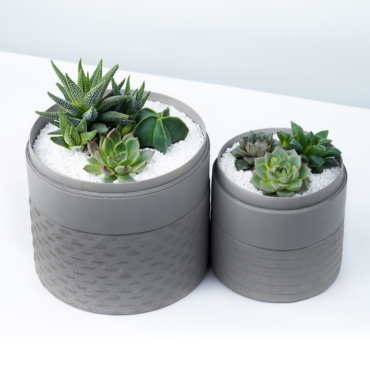 Duo set of Succulent mix in a grey handmade pot, lavish cacti mix with lids. Biodegradable and Recycled Pot. Long-lasting and sustainable plant gift.