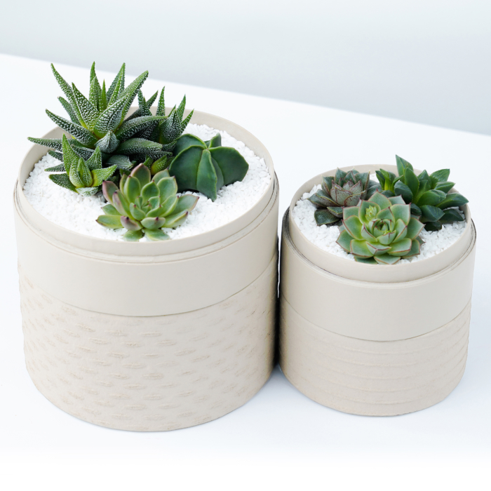 Duo set of Succulent mix in a white handmade pot, lavish cacti mix with lids. Biodegradable and Recycled Pot. Long-lasting and sustainable plant gift.