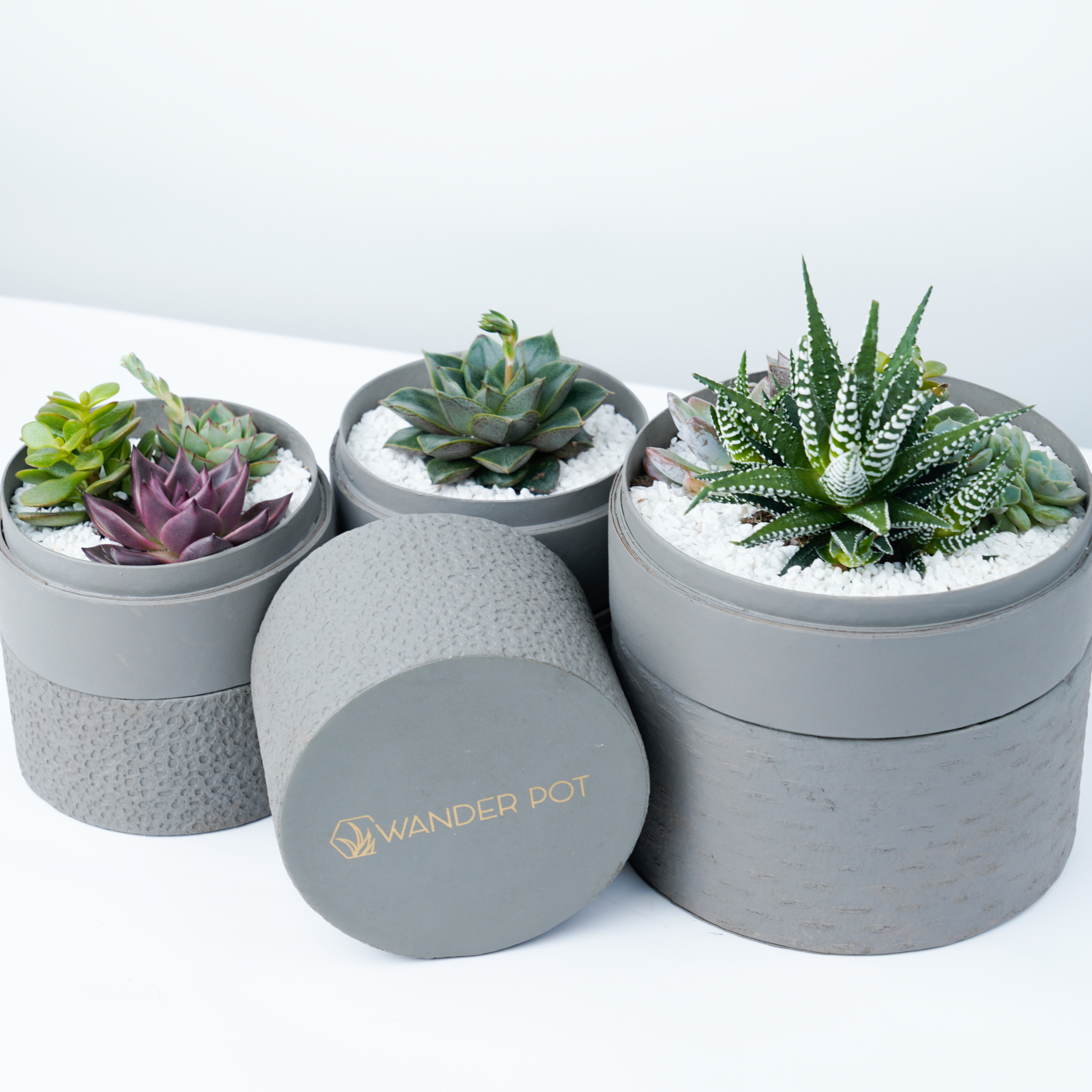 grey plant pots with succulents