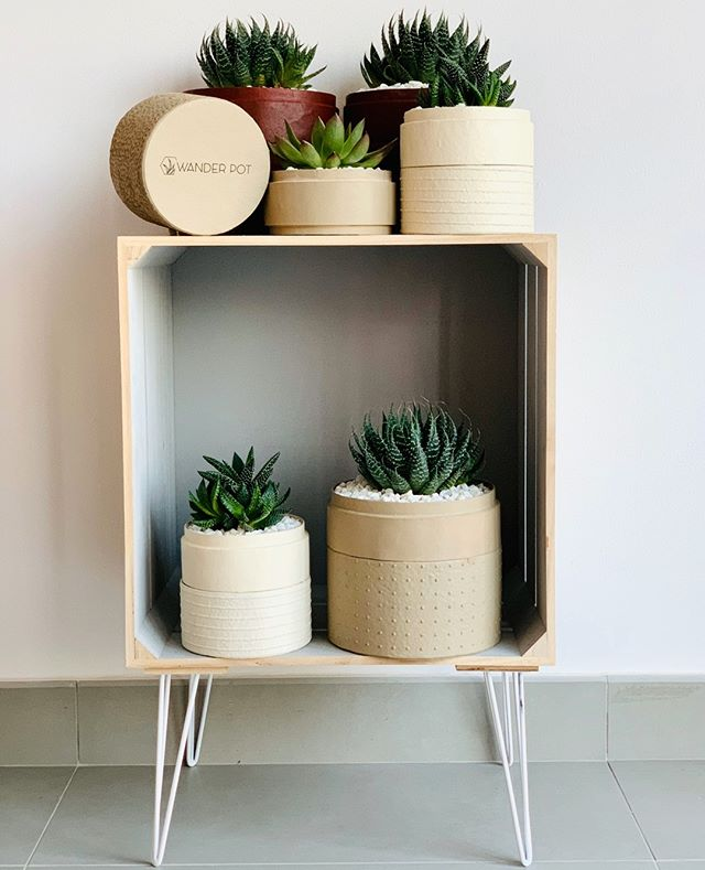 Shelf Ready sustainable plant gifts in recycled and handmade pots. Succulent mix in gorgeous pot with soil with delivery. Warm White and Latte handmade pots.