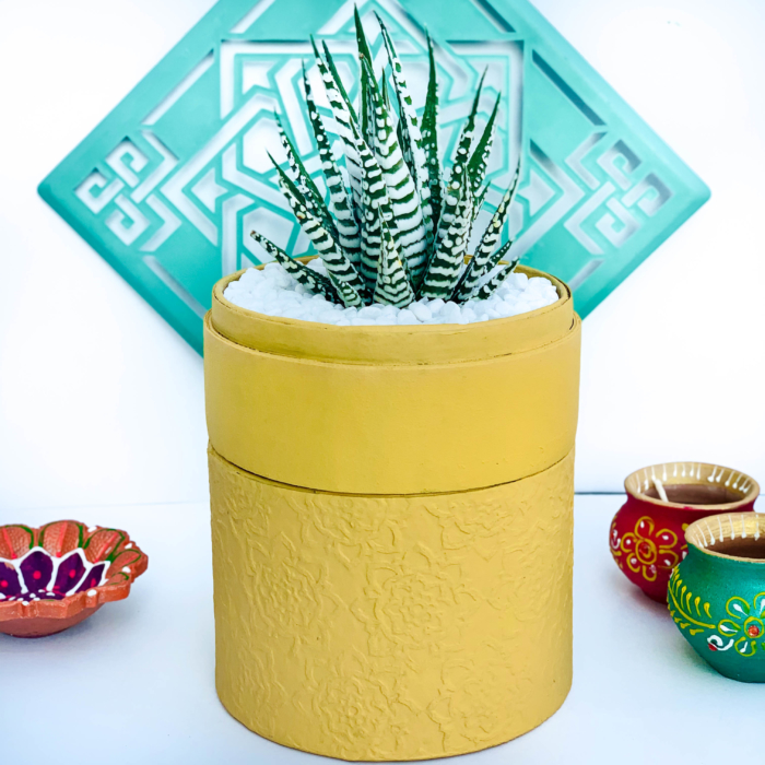 Diwali sustainable plant gifts with haworthia planted in a beautiful yellow planter - Diwali 2020 - Diwali gift ideas-45