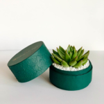 Echeveria succulent gift in a rich green pot / Sustainable Diwali gifts / Plant gifts UAE