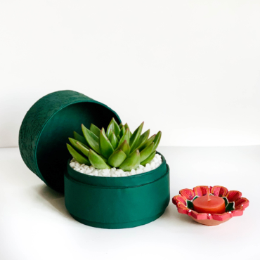 Diwali echeveria succulent gift in a rich green pot / Sustainable Diwali gifts / Plant gifts UAE