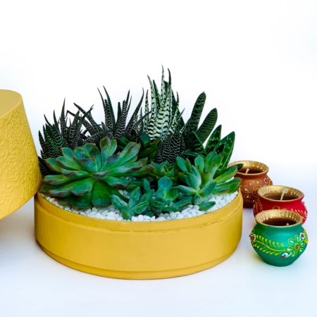 Diwali sustainable plant gifts with a lush mix of succulents in a gorgeous yellow pot - Diwali 2020 - Diwali gift ideas