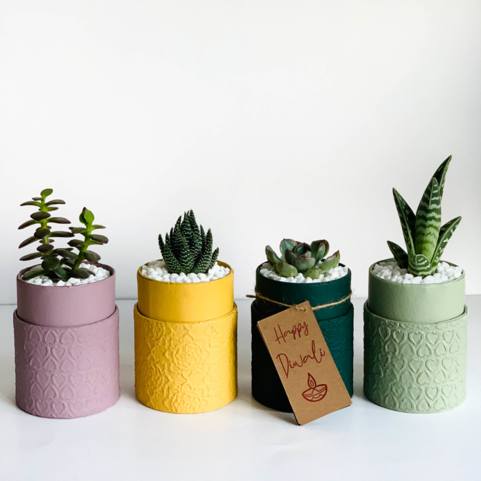 Diwali sustainable plant gifts - Diwali favours - Yellow planters with succulents Diwali 2020 - Diwali gift ideas-3