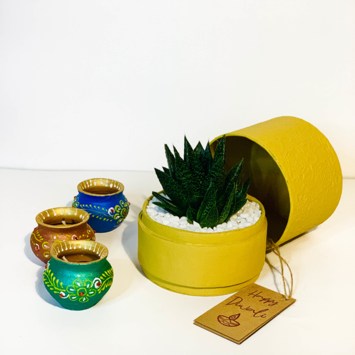 Diwali sustainable plant gifts with haworthia planted in a yellow pot - Diwali 2020 - Diwali gift ideas-45