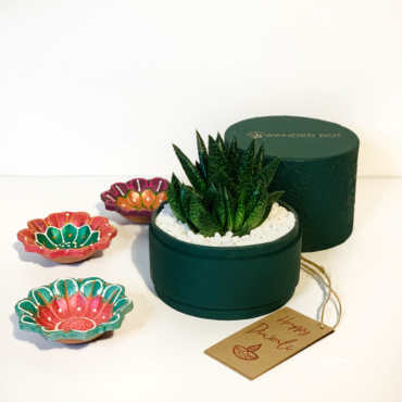 Diwali Haworthia succulent gift in a rich green pot / Sustainable Diwali gifts / Plant gifts UAE