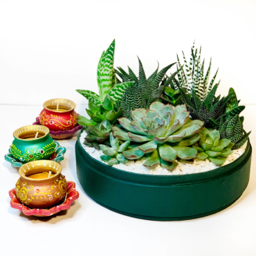 Diwali sustainable plant gifts - Lush succulent arrangement in a green pot - Diwali 2020 - Diwali gift ideas
