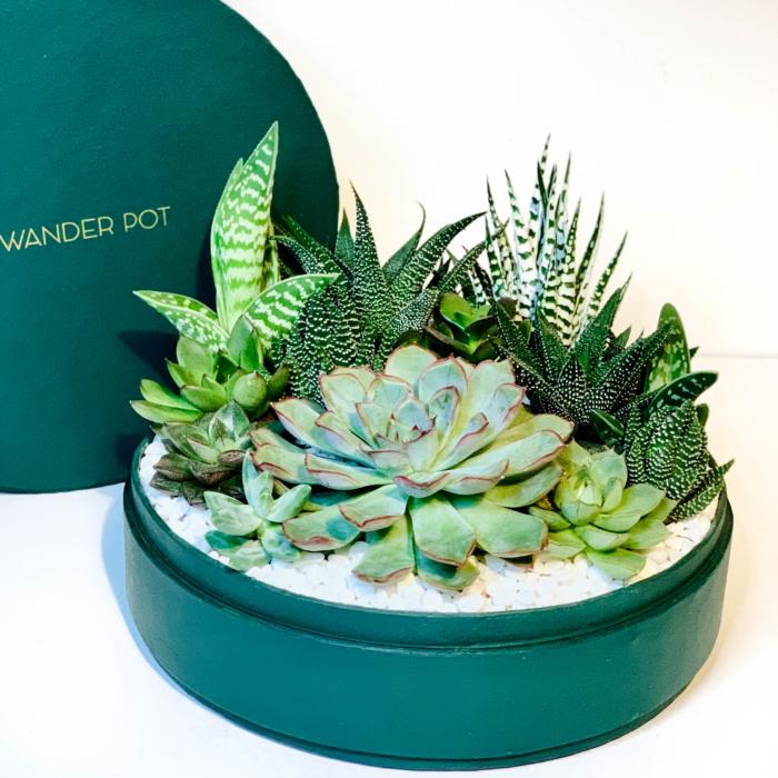 Lush green diwali succulent arrangement - Diwali sustainable plant gifts - Diwali 2020 - Diwali gift idea