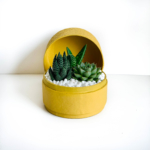 Diwali sustainable plant gifts - succulent mix in a mini yellow planter - Diwali 2020 - Diwali gift ideas