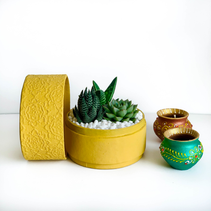 Succulent mix in a yellow box planter - Diwali sustainable plant gifts - Diwali 2020 - Diwali gift ideas