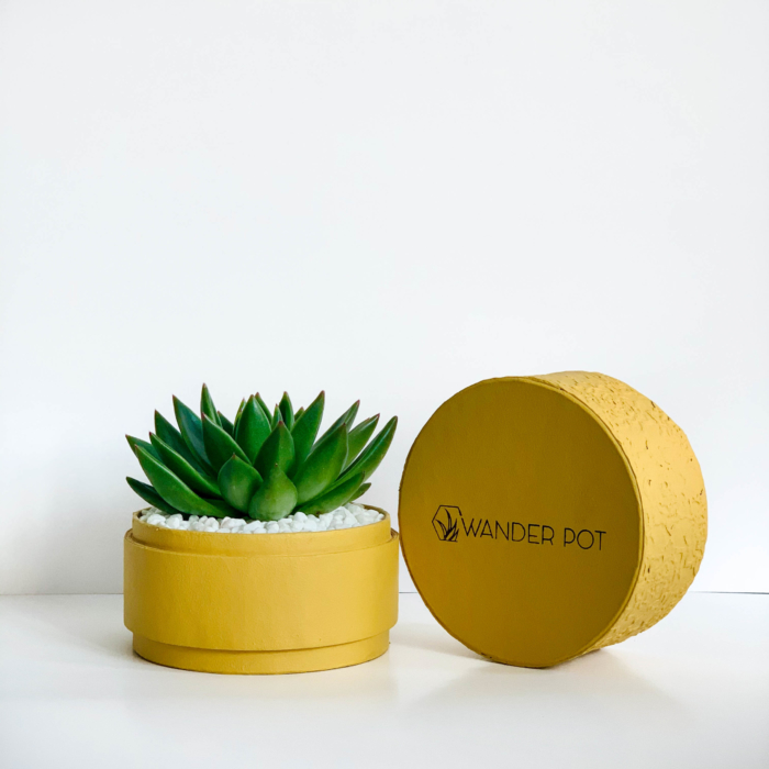 Diwali sustainable plant gifts with echeveria potted in a yellow planter - Diwali 2020 - Diwali gift ideas-4