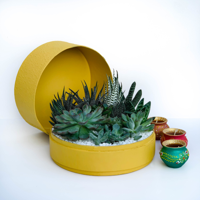 Diwali sustainable plant gifts with a lush mix of succulents in a yellow planter - Diwali 2020 - Diwali gift ideas