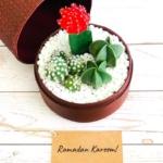 burgundy box ramadan message cacti