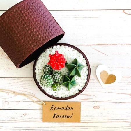 burgundy box cacti mix ramadan