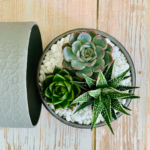 Mini Succulent mix in a grey handmade pot, mini cacti. Biodegradable and recycled pot. Long-lasting and sustainable plant gift.