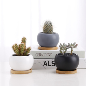 Assortment of mini succulent mix in ceramic pots. Personalised gift card. Biodegradable and recycled pot. Long-lasting and sustainable plant gift.