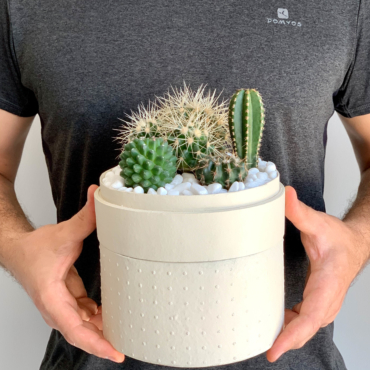 Midi Succulent mix in a warm white handmade pot, midi jungle cacti mix with lid held in hands. Biodegradable and recycled pot. Long-lasting and sustainable plant gift.