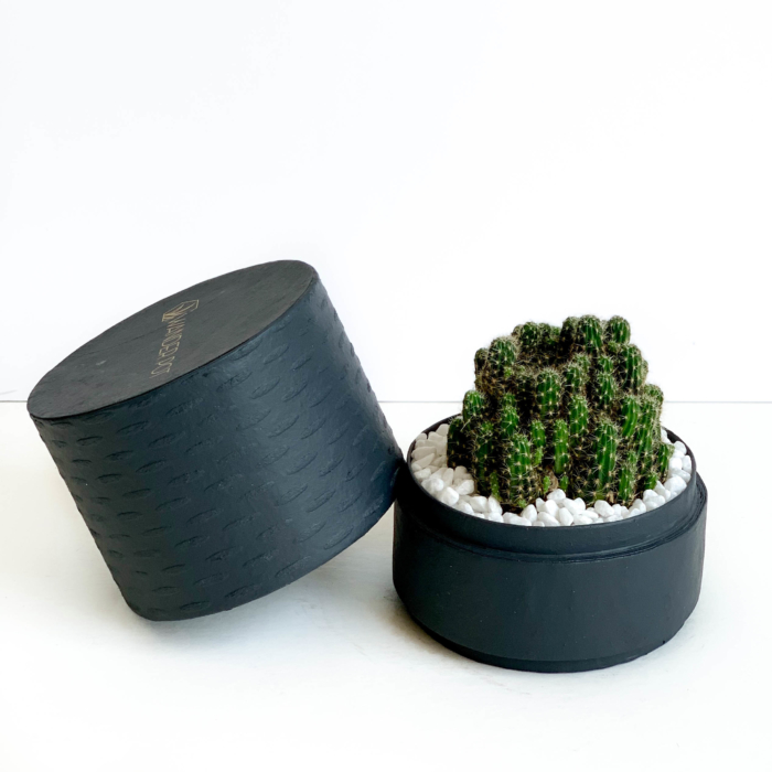 Landscape view of mini fairy castle cactus in a charcoal blue handmade pot, Acanthocereus, cereus with lid. Biodegradable and recycled pot. Long-lasting and memorable sustainable plant gift.