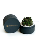 Mini fairy castle cactus in a charcoal blue handmade pot, Acanthocereus, cereus with lid. Biodegradable and recycled pot. Long-lasting and memorable sustainable plant gift.