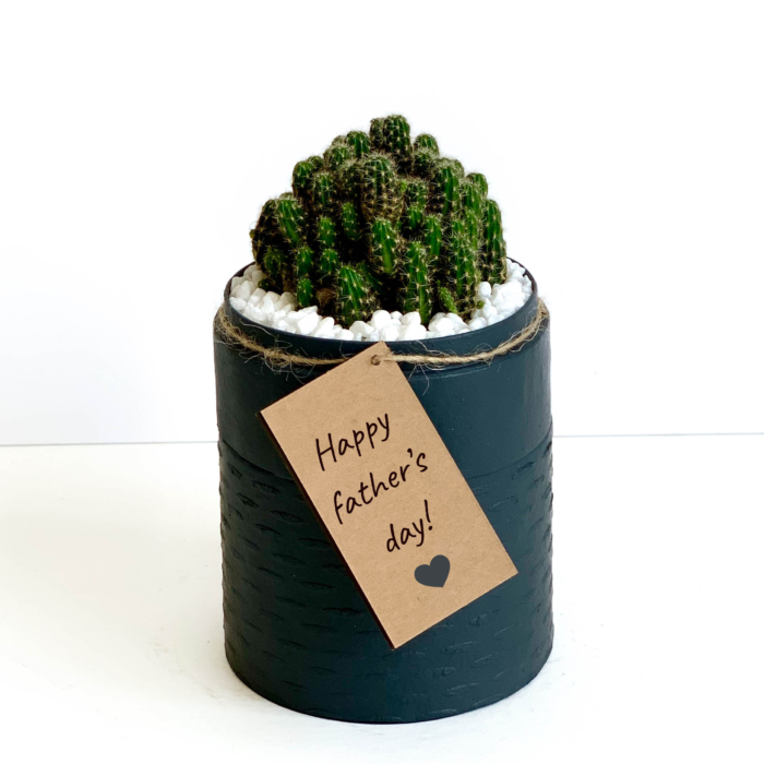 Portrait view of mini fairy castle cactus in a charcoal blue handmade pot, Acanthocereus, cereus with personalised gift card. Biodegradable and recycled pot. Long-lasting and memorable sustainable plant gift.