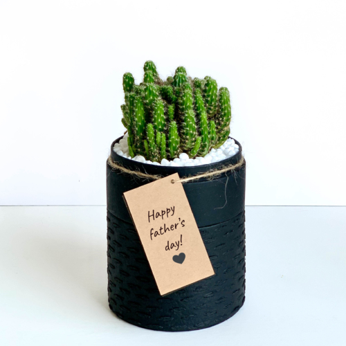 Portrait view of mini fairy castle cactus in a black handmade pot, Acanthocereus, cereus with personalised gift card. Biodegradable and recycled pot. Long-lasting and memorable sustainable plant gift.