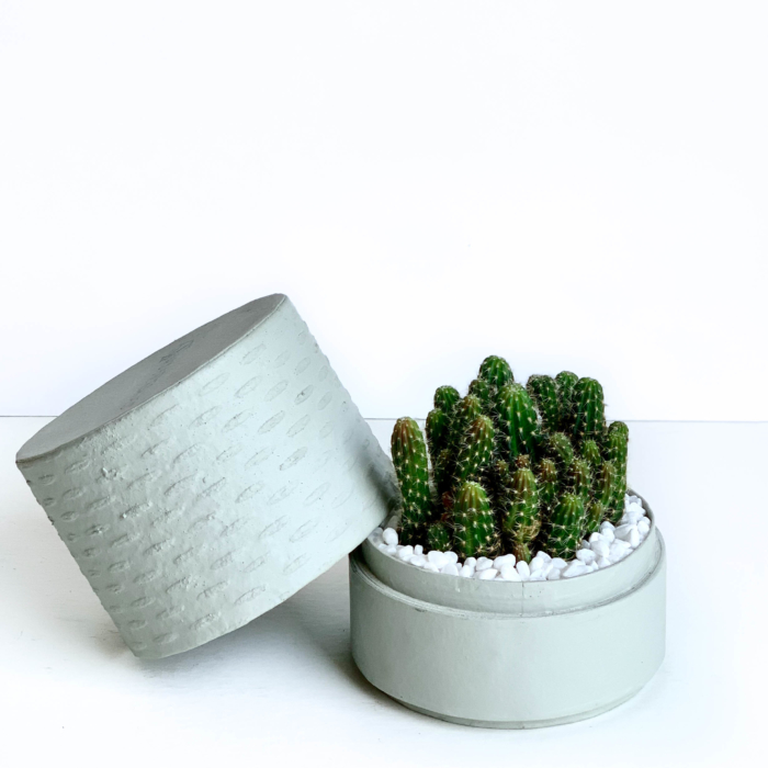 Mini fairy castle cactus in a mint green handmade pot, Acanthocereus, cereus with lid. Biodegradable and recycled pot. Long-lasting and memorable sustainable plant gift.