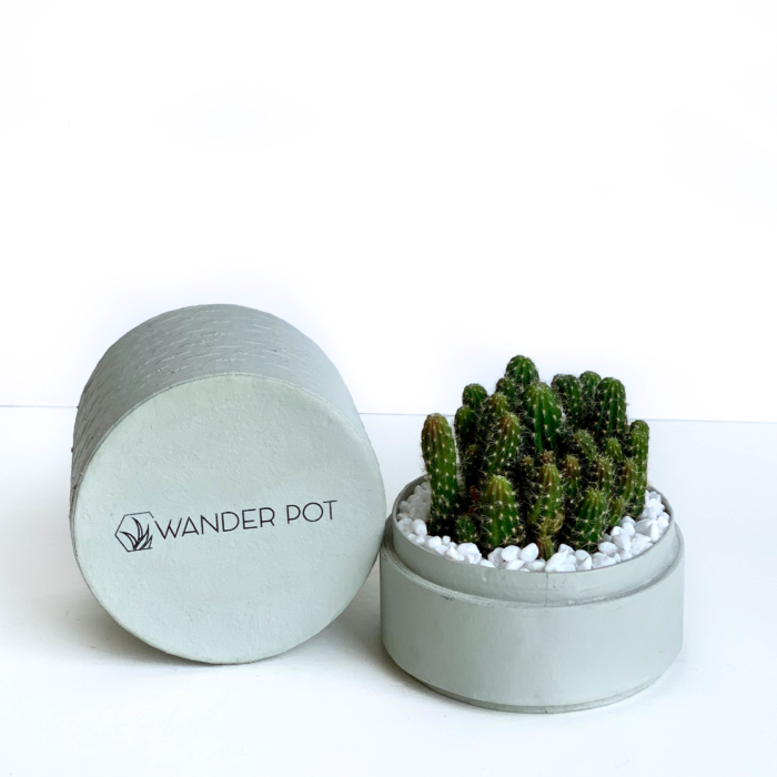 Landscape view of Mini fairy castle cactus in a mint green handmade pot, Acanthocereus, cereus with lid. Biodegradable and recycled pot. Long-lasting and memorable sustainable plant gift.