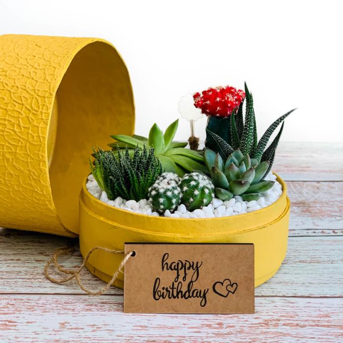 succulent mix in a midi mustard yellow box