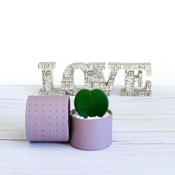 hoya heart pink love