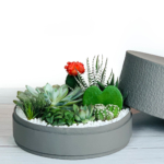 grey box with succulents ramadan