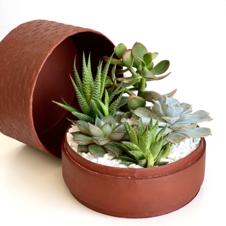 Midi Succulent mix in a red handmade pot, midi jungle cacti mix. Biodegradable and recycled pot. Long-lasting and sustainable plant gift.