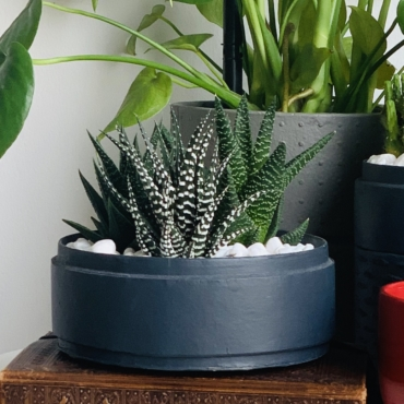 Midi Succulent mix in a charcoal blue handmade pot, haworthia mix. Biodegradable and recycled pot. Long-lasting and sustainable plant gift.