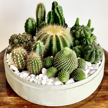 Lush Cacti in a Mint Green handmade pot, Succulent Mix. Biodegradable and Recycled Pot. Long-lasting and sustainable plant gift.