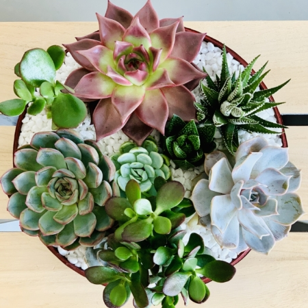 Lush Succulent mix in a red handmade pot, cacti mix. Biodegradable and Recycled Pot. Long-lasting and sustainable plant gift.