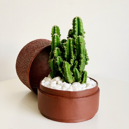 Mini fairy castle cactus in a red handmade pot, Acanthocereus, cereus with lid. Biodegradable and recycled pot. Long-lasting and memorable sustainable plant gift.