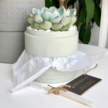 Mini Echeveria in a mint green handmade pot, cute and strong succulent with personalised gift card. Biodegradable and recycled pot. Long-lasting and memorable sustainable plant gift.