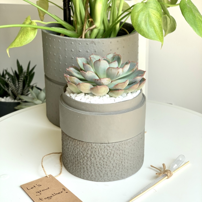 Mini Echeveria in a grey handmade pot, cute and strong succulent with personalised gift card. Biodegradable and recycled pot. Long-lasting and memorable sustainable plant gift.