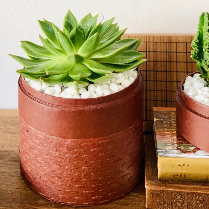 Midi Echeveria in a red handmade pot, cute succulent. Biodegradable and recycled pot. Long-lasting and memorable sustainable plant gift.